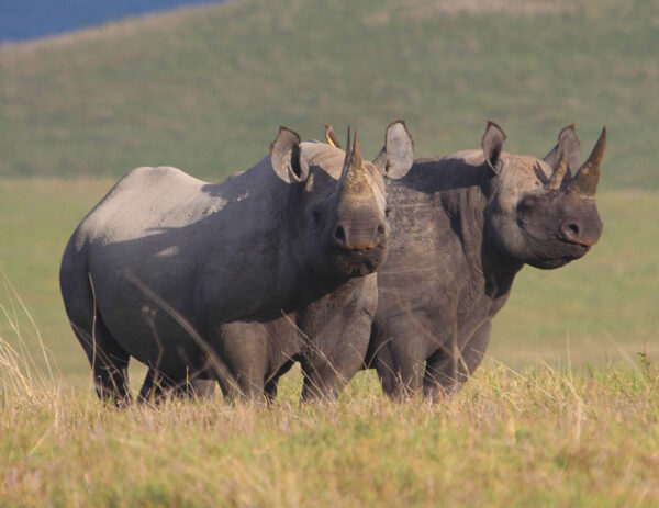 2 days tarangire & Ngorongoro