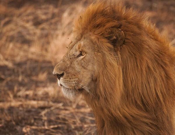 Tanzania Cheap safari & Cultural tour